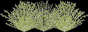 Icon of a native shrub.