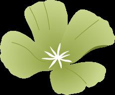 Icon of a flower similar to purplish morning glory.