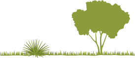 Icon of a shrub plant and a tree separated with proper spacing.