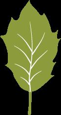Icon of an oak leaf.