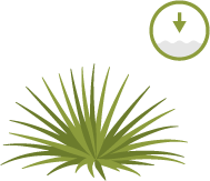 Icon of a native shrub with a circle showing low water demand.