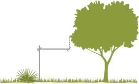A tree and a shrub with spacing recommendations for vertical clearance.