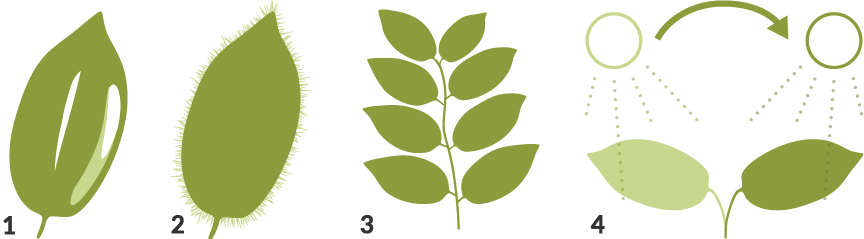 Series of 4 icons showing different plant leaf shapes.