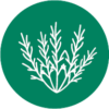 Icon of a native plant with a dark green circle background.