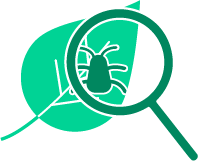 icon of a bug on a leaf under a magnifying glass
