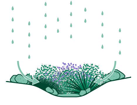 Icon of a rain garden with native plants