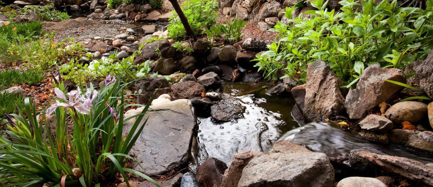 Stream with rocks and waterfall in Kyte California native plant backyard garden